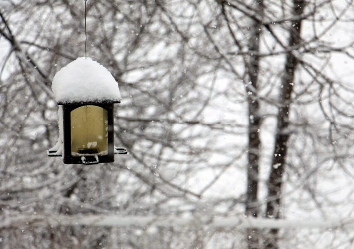 Piękny ogród zimą