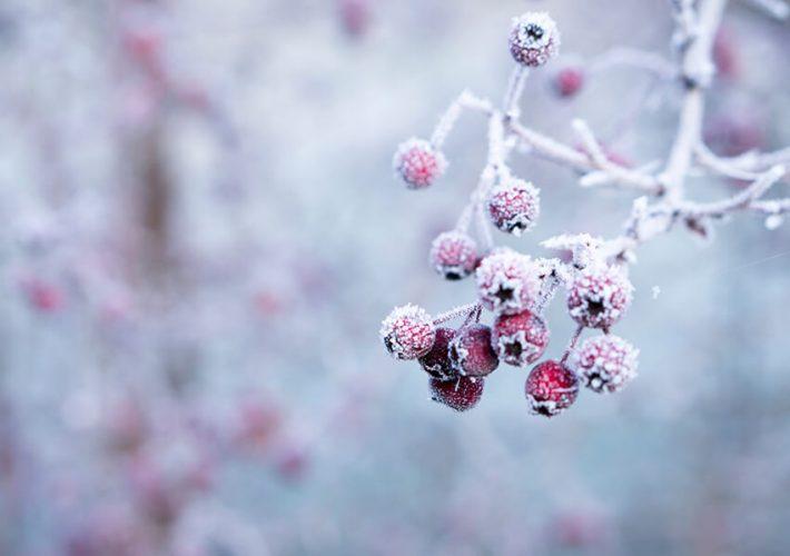 Jak zaaranżować ogród na zimę?